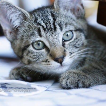 Cheap & Easy DIY Cat Collar (Minimal Sewing)