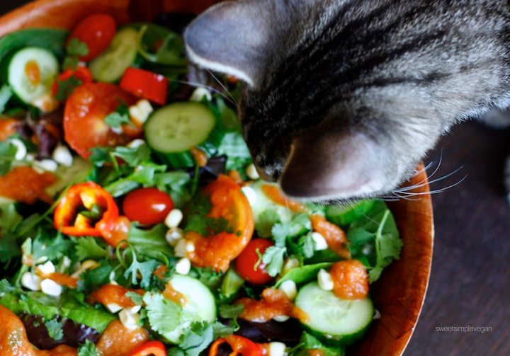 Raw Spicy Tomato Jalapeño Salad (Oil- & Salt-free)