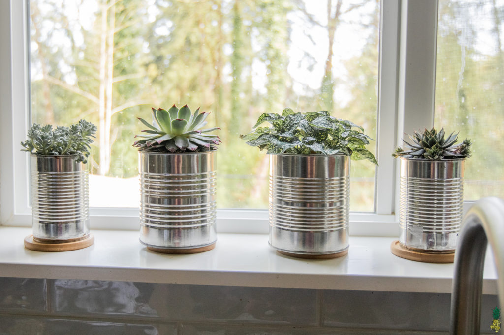 Planters filled with succulents made from tin cans