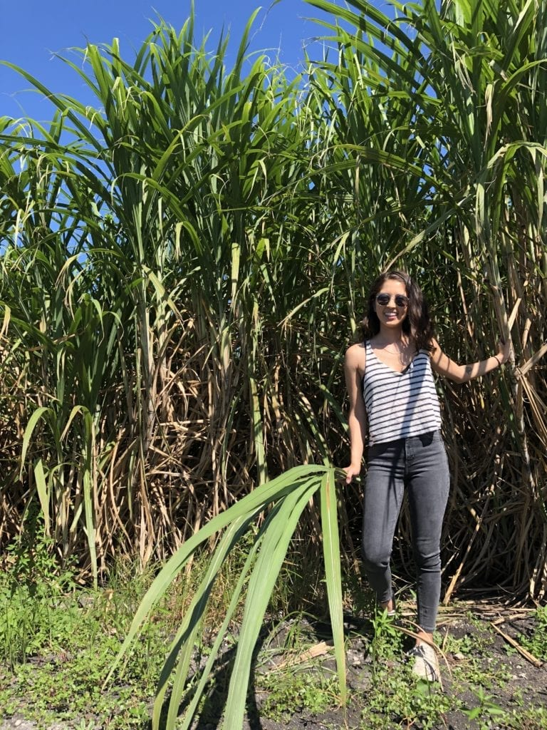 A girl standing in a sugar cane field holding sugarcane in her hands by sweet simple vegan
